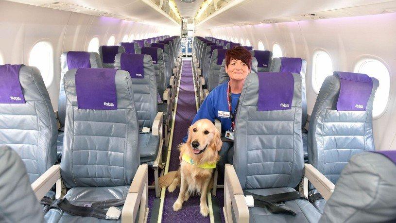 Aereo Privato Cani : Cani in aereo addio alla stiva cecchini viaggi